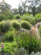 Oz Garden Aug 17